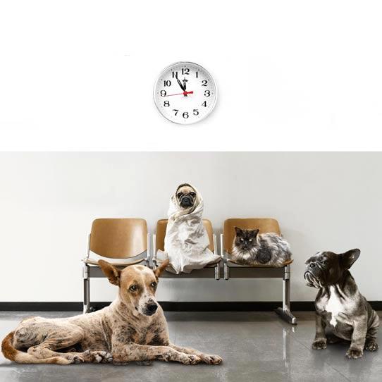 Werbung Tiergesundheit 1