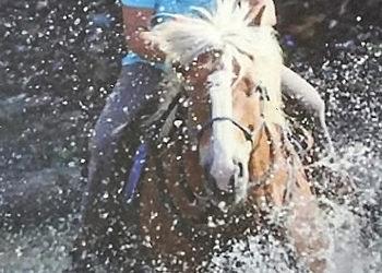 Wie die Pferdetrainerin Andrea March zur Tierkommunikation kam