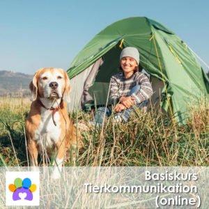 Tierkommunkation für Anfänger