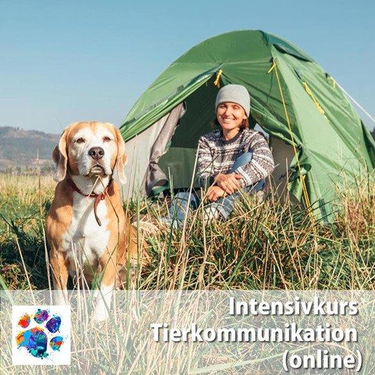 Online Intensivkurs Tierkommunikation 2