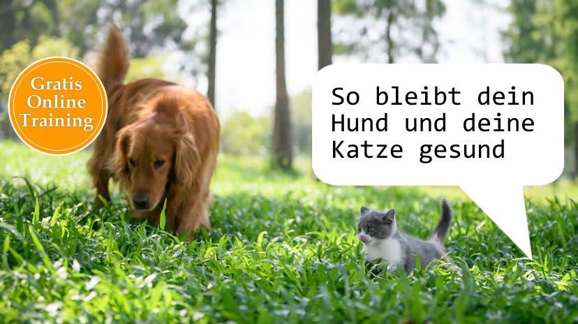 Gesundheit für Hund und Katze