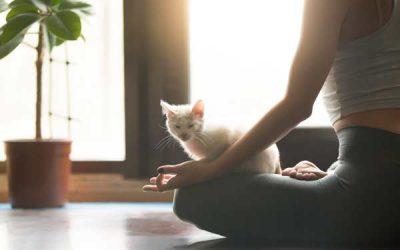 Gaanz ruhig… – Entspannungstechniken für die Tierkommunikation