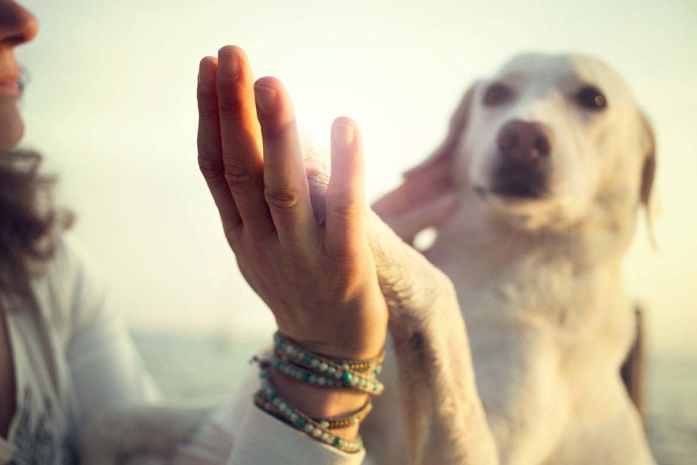Tierkommunikation lernen – kann das jeder?