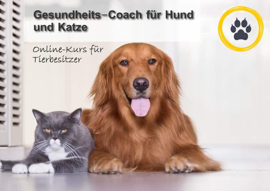 """Online-Kurs """"Gesundheits-Coach für Hund und Katze"""" ab dem 29.10.2019 1"""