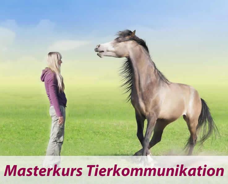 Tierkommunikation Ausbildung 2