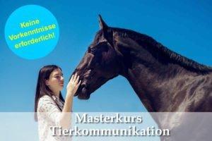 Das jüngste Masterkurs Tierkommunikation Finale 3