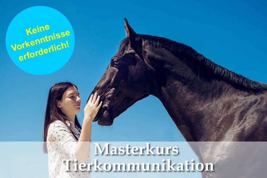 Tierkommunikation Ausbildung - Masterkurs ab September 2018 (ausgebucht!) 1