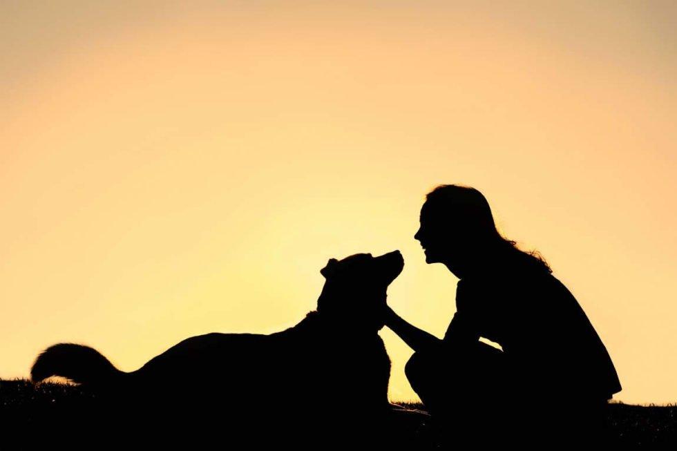 Kranke Tiere und die Tierkommunikation