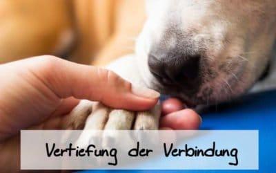 Seminar II – Aufbaukurs Tierkommunikation mit Body-Scan