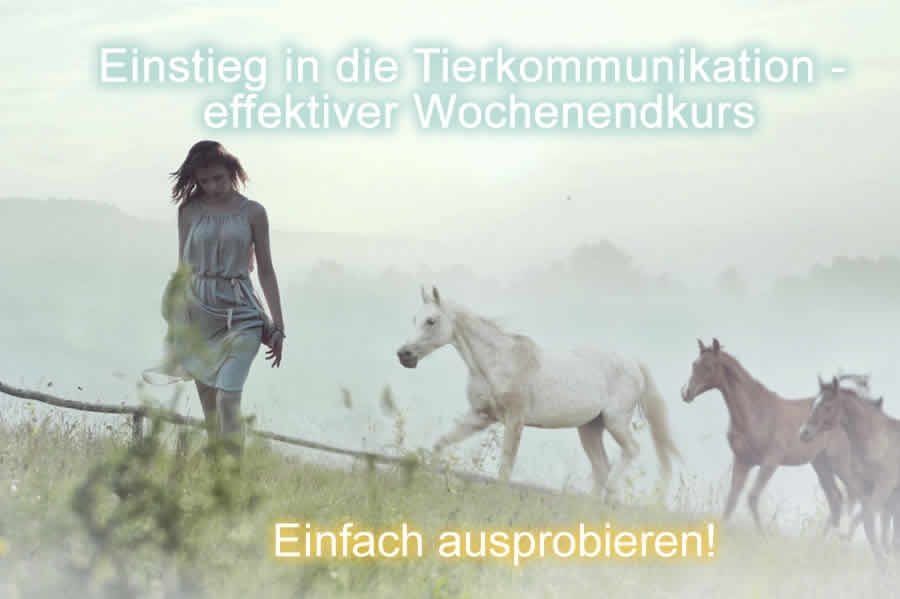 Basisseminare Tierkommunikation Trier 2