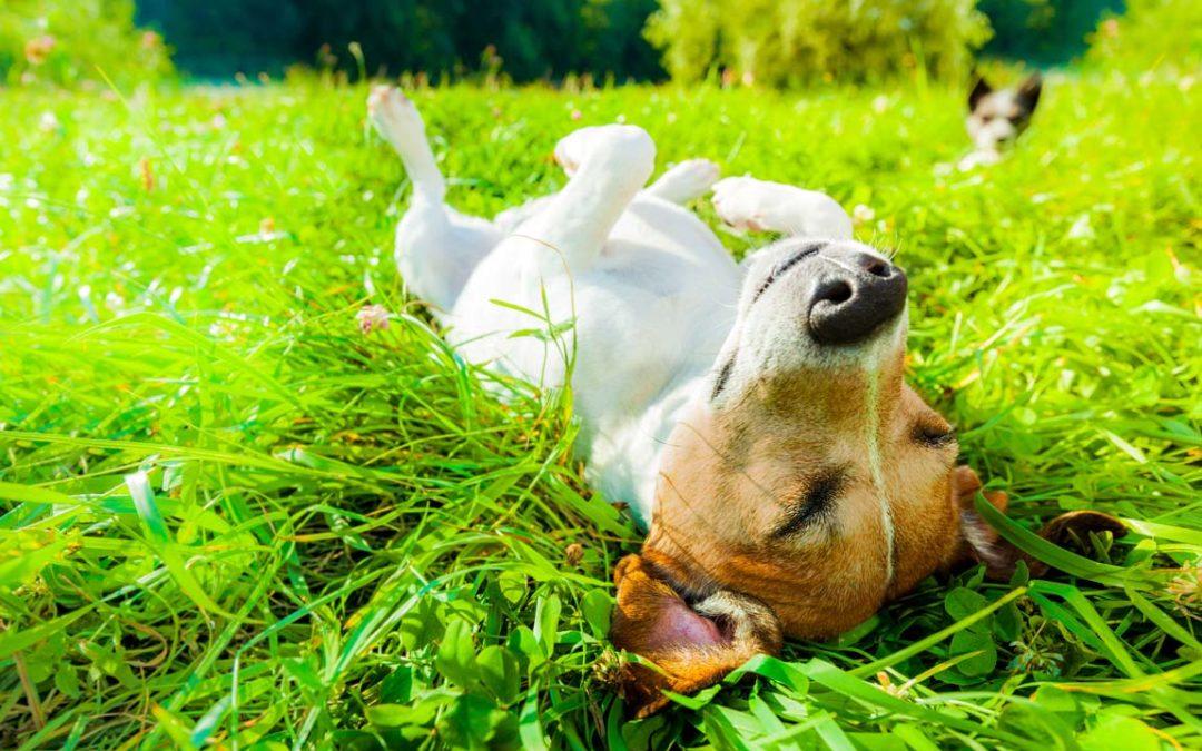 Was wir von Tieren über die Tierkommunikation lernen können