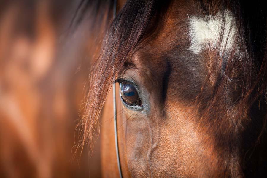 Tierkommunikation mit Westfale