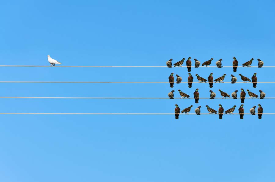 Zu welcher Seite gehörst du? Tierkommunikation als Weltanschauung…