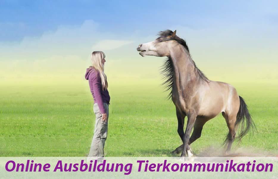 online-ausbildung-tierkommunikation